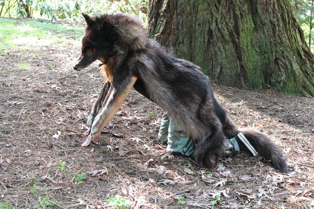 bigblackwolf5