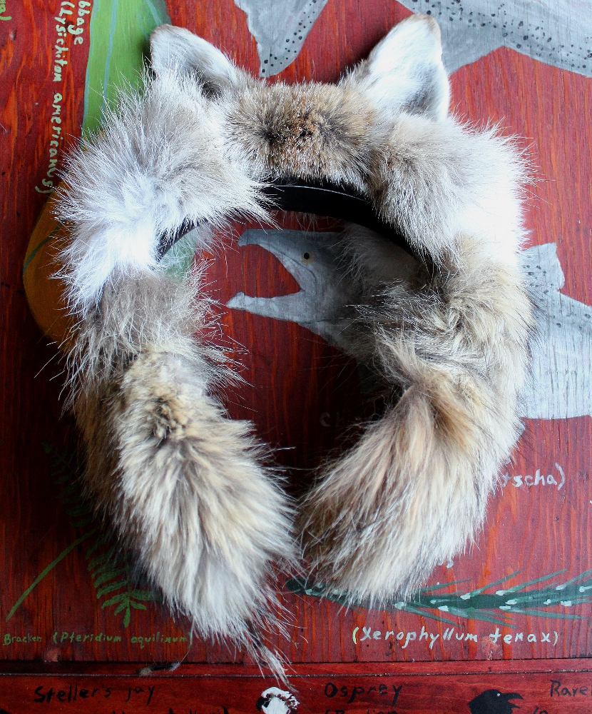 Headphones with coyote ears and fur, commissioned by Bell Museum of Natural History, Minneapolis