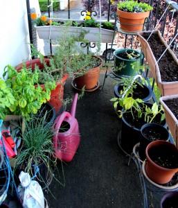 Still little. Still lovely. My balcony garden <3