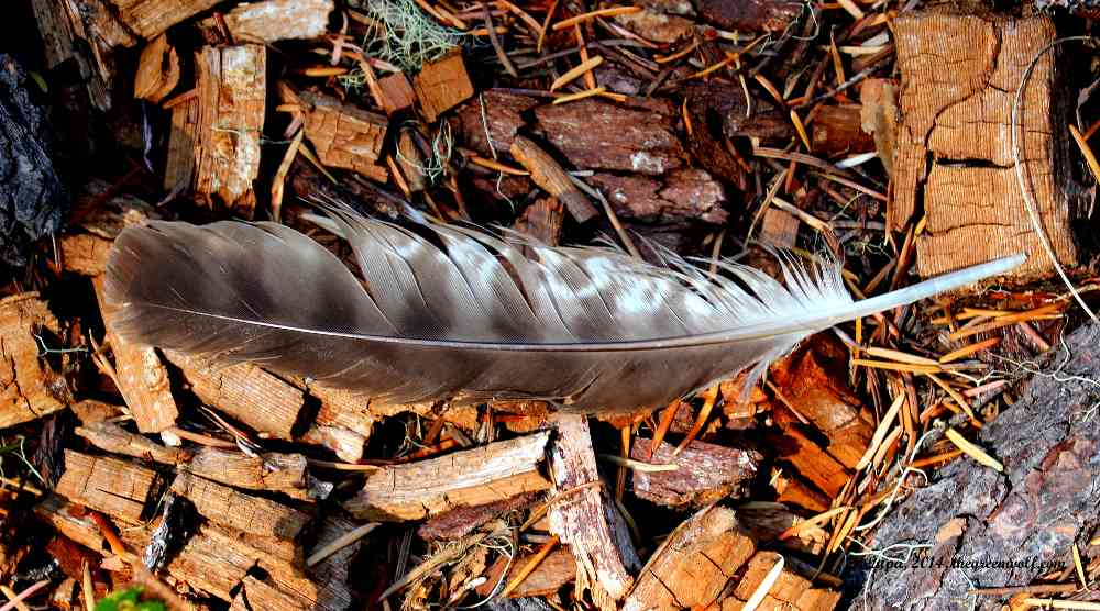 owl_feather_by_lupagreenwolf-d7ypzc7